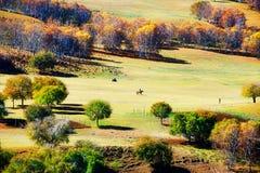 Los abedules del otoño en el prado de oro Foto de archivo libre de regalías