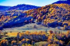 Los abedules del otoño en la colina Foto de archivo libre de regalías