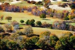 Los abedules del otoño en la pradera de oro Foto de archivo libre de regalías