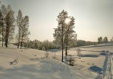 Los abedules desnudos en nieve profunda en el invierno se inclinan en la tarde Foto de archivo