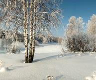 Los abedules desnudos en nieve profunda en medio del invierno colocan Imágenes de archivo libres de regalías