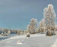 Los abedules finos en el invierno se inclinan en nieve profunda con el bosque canoso en fondo Imagen de archivo