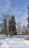Los abedules y los abetos cubiertos con nieve fresca en la ciudad parquean por la mañana escarchada del invierno Fotos de archivo libres de regalías