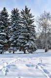 Los abedules y los abetos cubiertos con nieve fresca en la ciudad parquean, con los rastros de nieve en el primero plano, en el i Fotografía de archivo libre de regalías