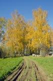 Los abedules y las colmenas rurales del otoño del camino les acercan. Fotos de archivo