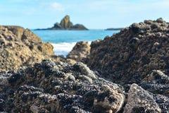 Los acantilados y las formaciones de roca a lo largo de la arena negra Whatipu varan en Huia Imagenes de archivo