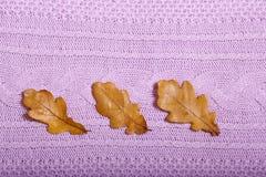 Los accesorios del otoño hicieron punto los suéteres y las hojas Fotografía de archivo