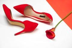 Los accesorios elegantes femeninos forman el equipo de lujo fijado: zapatos y flores rojos en el fondo coralino del color y blanc fotos de archivo libres de regalías