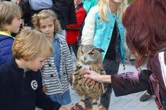 Los adultos y los niños están acariciando un búho de águila Foto de archivo libre de regalías
