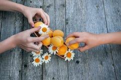 Los albaricoques maduros mienten en un fondo de madera La muchacha toma el albaricoque de un amigo Los niños comparten la cosecha imagen de archivo