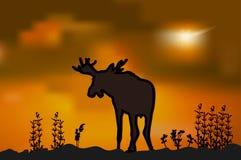 Los alces siluetean en la puesta del sol Foto de archivo libre de regalías