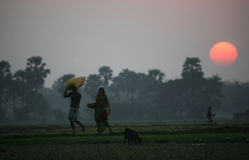 Los aldeanos vuelven a casa después de un día duro en los campos del arroz Imágenes de archivo libres de regalías