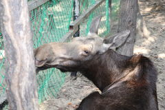 Los allo zoo Fotografie Stock Libere da Diritti