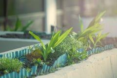 Los almácigos de flores, un concepto para el paisaje, cultivan un huerto fondo del verano Foto de archivo libre de regalías