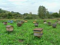 Los alte hölzerne Bienenstöcke auf einem grünen Feld Lizenzfreies Stockbild