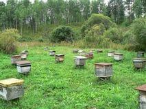 Los alte hölzerne Bienenstöcke auf einem grünen Feld Lizenzfreie Stockfotos