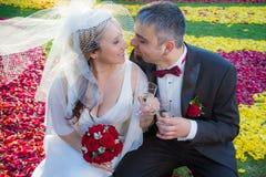 Los amantes celebran su boda fotografía de archivo libre de regalías