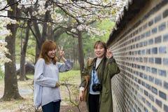 Los amigos asiáticos hermosos disfrutan de la estación de Sakura Imagenes de archivo
