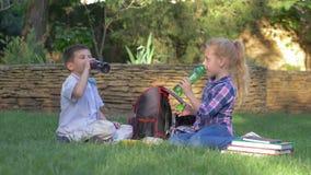 Los amigos jovenes felices junto beben el jugo de las botellas que se sientan cerca de las mochilas en césped durante almuerzo en almacen de video