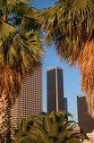 Los Angeles, CA skyline and palm trees Royalty Free Stock Photo