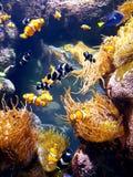 Los angeles california fish corals aquarium animals venice beach park sea pier water bridge building palmtrees street sky sun stock image