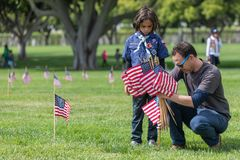 LOS ANGELES, CALIFORNIA - MAY, 26, 2018: Hundreds of scouts of a. Ll ages volunteered for the annual Memorial Day flag placement at the Los Angeles National Royalty Free Stock Photos