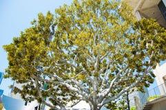 Los Angeles, im Stadtzentrum gelegen Lizenzfreie Stockfotos