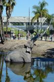 Lake Pit at the La Brea Tar Pits. LOS ANGELES - MARCH 28, 2018: Lake Pit at the La Brea Tar Pits.  Pleistocene mammoth statues depict how animals became trapped Stock Photo