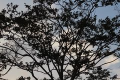 Los Angeles niebo z Drzewnym cieniem Zdjęcia Stock
