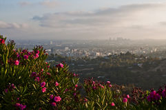 Los Angeles overview during sunset Royalty Free Stock Images