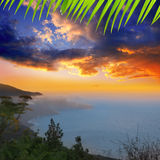 Los Angeles Palma Punta Gaviota od Cuplida Zdjęcia Royalty Free