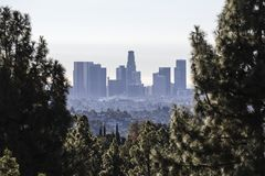 Los Angeles Skyline Forest View royalty free stock images