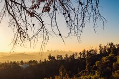 Los Angeles skyline at sunrise with trees in foreground, California Royalty Free Stock Images