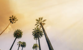 Los Angeles, West Coast Palm Tree Sunshine Stock Photography