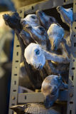 los angeles wprowadzać na rynek Paz czarownicy zdjęcie stock