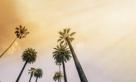 Los Angeles, zachodniego wybrzeża drzewka palmowego światło słoneczne Fotografia Stock