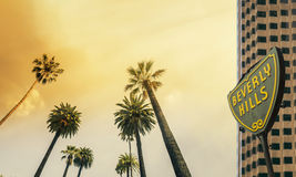 Los Angeles, zachodniego wybrzeża drzewka palmowego światło słoneczne Zdjęcia Stock