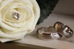 Los anillos de bodas con se levantaron Imagen de archivo