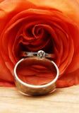 Los anillos de bodas en un rojo se levantaron Foto de archivo