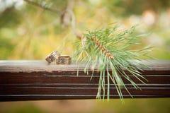 Los anillos de bodas en un tablero de madera atavían agujas Foto de archivo