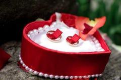 Los anillos de bodas mienten cuidadosamente en una caja roja Imágenes de archivo libres de regalías