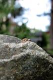 Los anillos de bodas mienten en un césped de piedra grande Fotografía de archivo