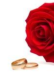 Los anillos de bodas y se levantaron Fotografía de archivo libre de regalías