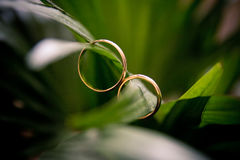 Los anillos en las flores, en una caja, en una tela blanca en los juguetes, colores, casandose los detalles, anillos de bodas Imagen de archivo libre de regalías
