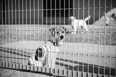 Los animales abandonaron la perrera Imagen de archivo