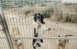 Los animales abandonaron la perrera Fotografía de archivo