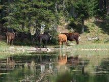 Los animales acercan al lago Imagen de archivo libre de regalías