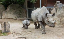 Los animales animales del parque zoológico del bebé del rinoceronte del rinoceronte toman el cuidado de bebés Foto de archivo