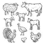 Los animales del campo detallaron el sistema del icono, estilo del esquema libre illustration