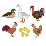 Los animales del campo fijan, vector con los artículos de la familia y de la granja del pollo Sistema de pájaros nacionales Galli Imagen de archivo libre de regalías